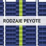 Rodzaje peyote
